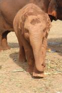 Resident of the Elephant Nature Park