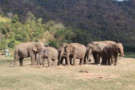 Residents of the Elephant Nature Park